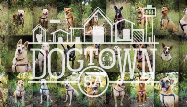 Dogtown South Africa